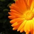 mindfulnesstraining bij mindfulness-rotterdam