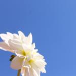 Stilte momenten bij Mindfulness-Rotterdam